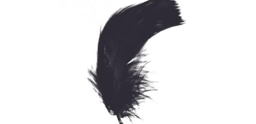 高画質羽根透過PNG素材